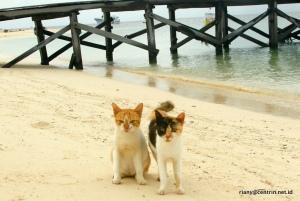 2 kucing penghuni koding gareng keke