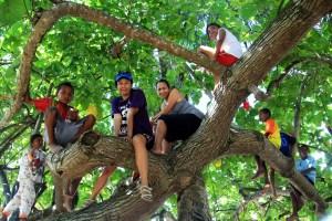 Pohon di desa Saonek